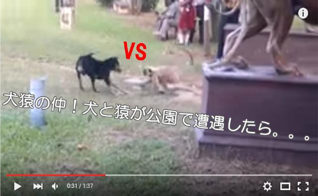 犬猿の仲 犬と猿が公園で遭遇したら、、、