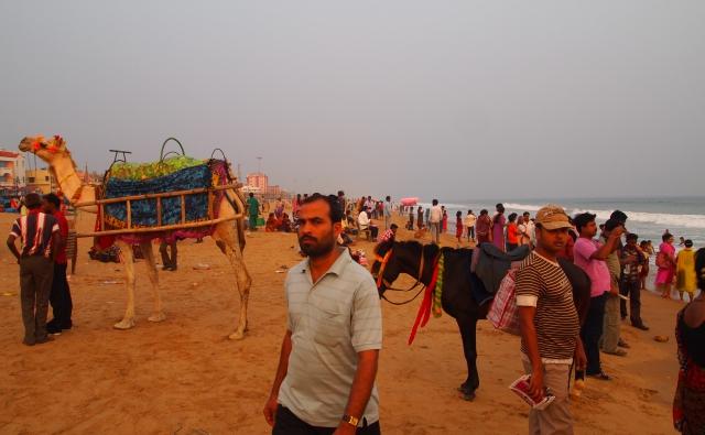 昼間のビーチサイド。人とラクダと馬。