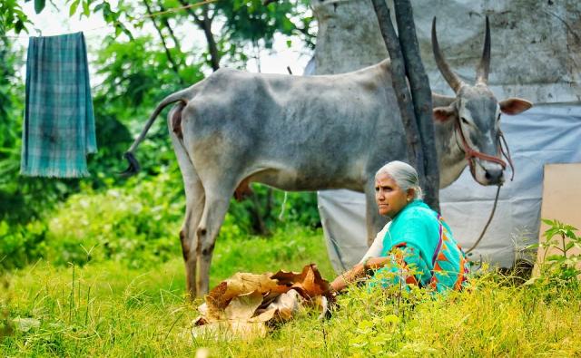 牛とおばあちゃんの写真です。