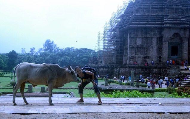 世界遺産スーリヤ寺院で牛さんと♪