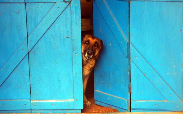 サンタナ犬モッティがお見送りする風景。