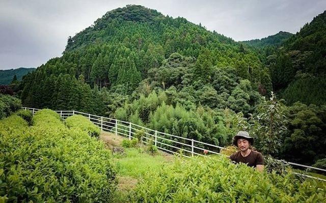 茶畑で働く坂本さん