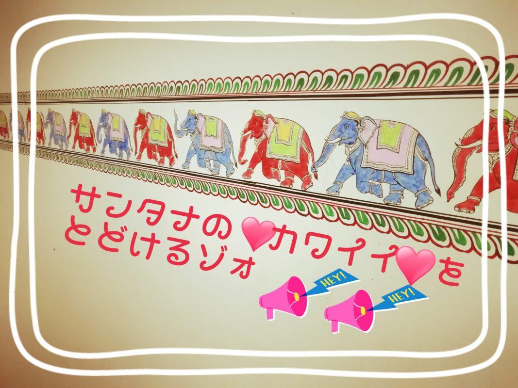 サンタナの「カワイイ」を届けるゾウ!