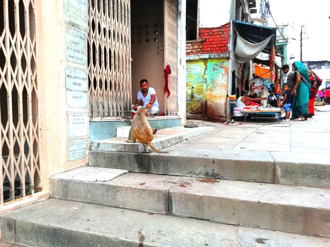 寺院の前に座るお猿さん