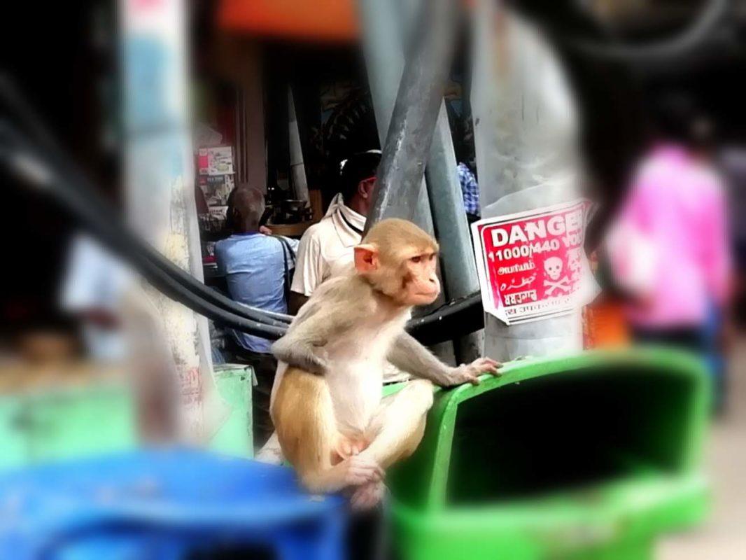 市場のお猿さん